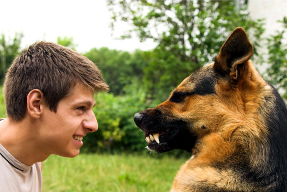 фото агрессии собакой