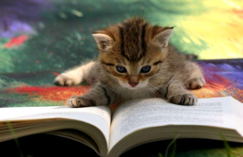 Законы племен книга коты воители читать